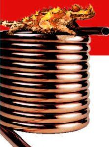 copper-coil-lizzard